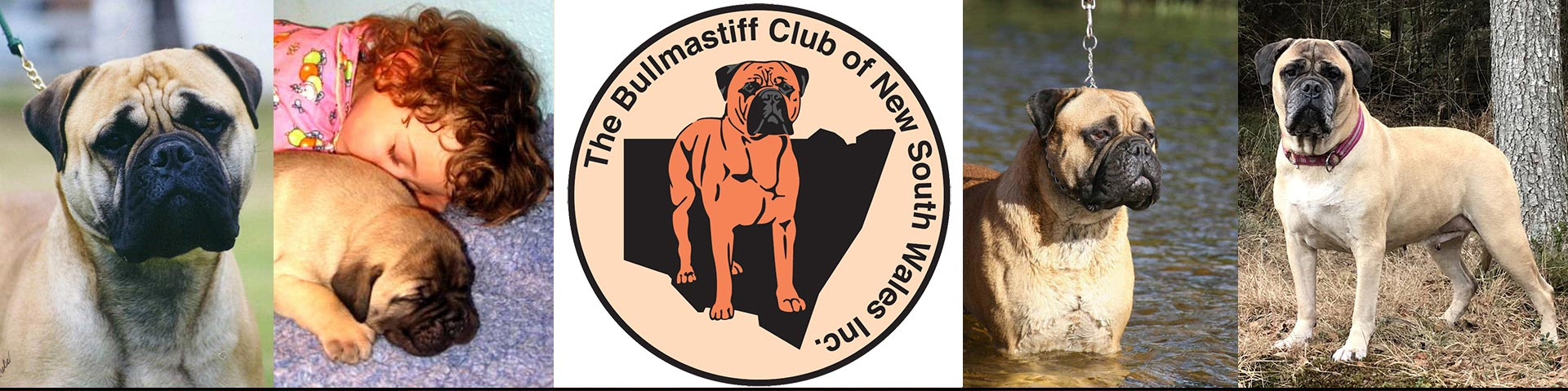 The Bullmastiff Club of NSW Inc